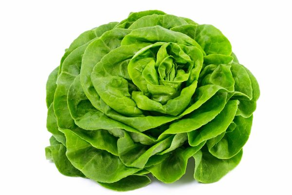 salade-laitue.jpg
